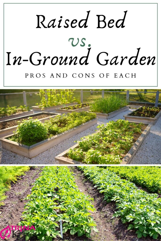 Raised Bed Vs In-Ground Gardens