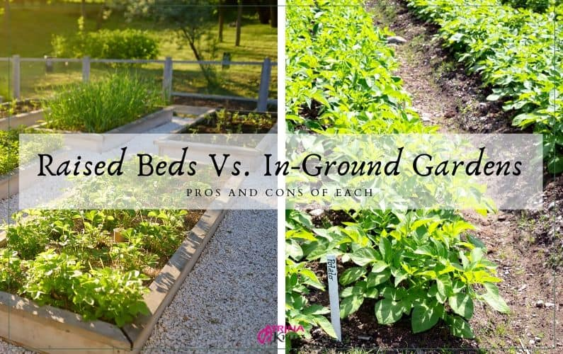 Which is best? The pros and cons of raised beds and in-ground gardens