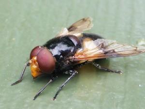 Bie (?)  på gelenderet