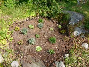 Nyplantet steinbedsområde i øst
