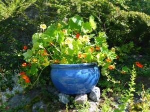 Sareptas blomkarsekrukke