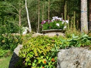 Omringet margerittkrukke: villvin, erteblomst og blomkarse på opptur