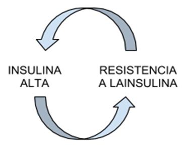 ciclo resistencia insulina