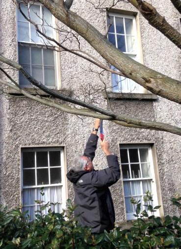 david-hackett-taking-large-branch-sample-of-snake-bark-tree