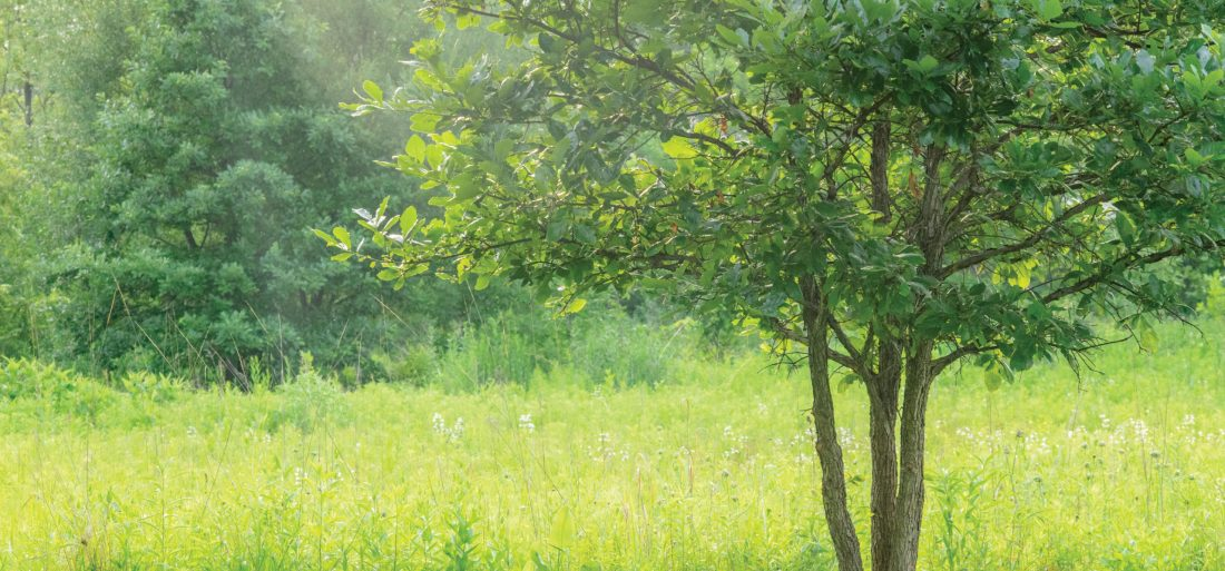 Home Alone #7 – Growing Like Trees