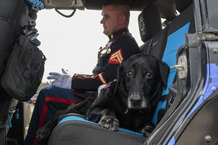 Собаку-сапера похоронили как настоящего героя (6 фото)