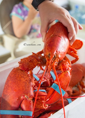 In Canada it is one lobster per person...
