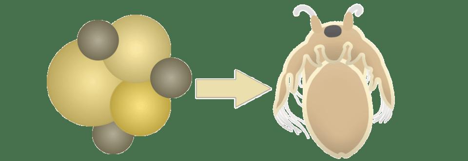 Von Triops Ei zu Triops Nauplie