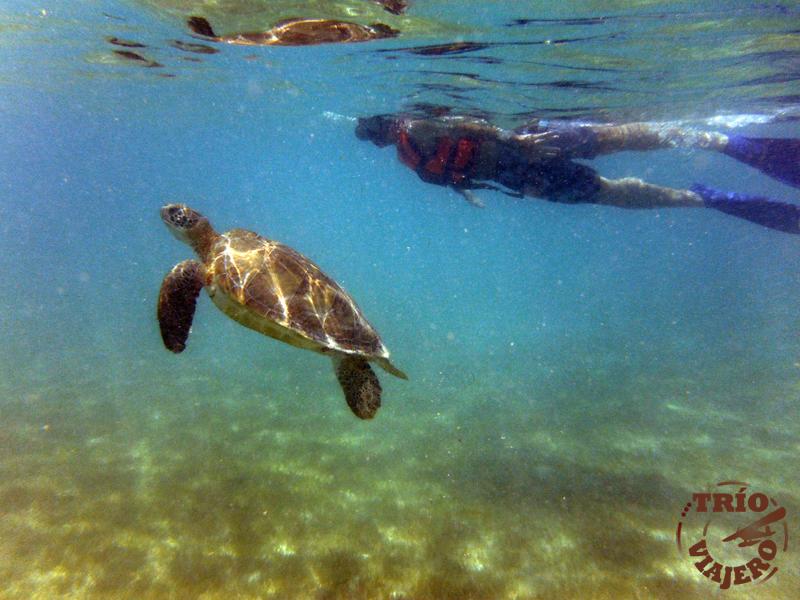 Playa de Akumal (Tulum - México - América) ⋆ Trío Viajero