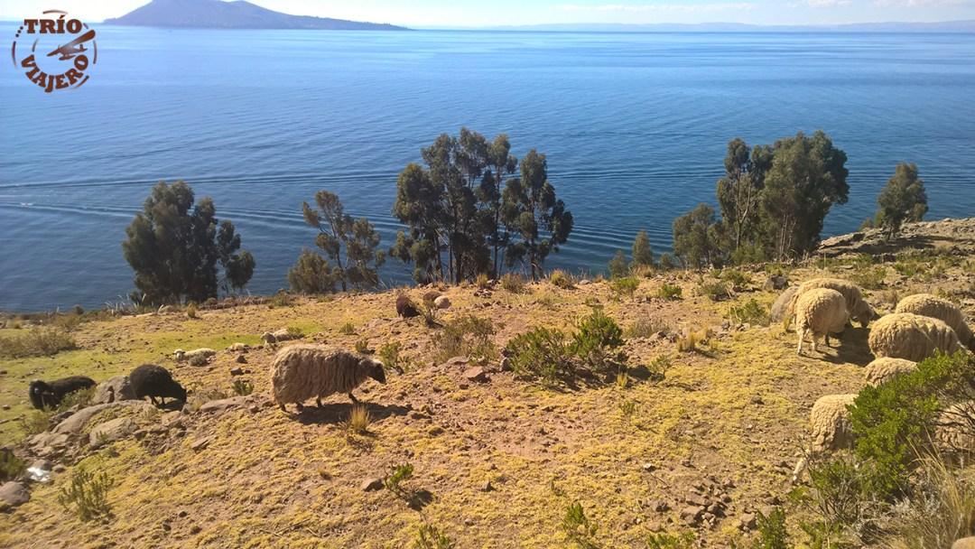 Isla Taquile (Puno - Perú - América) ⋆ Trío Viajero