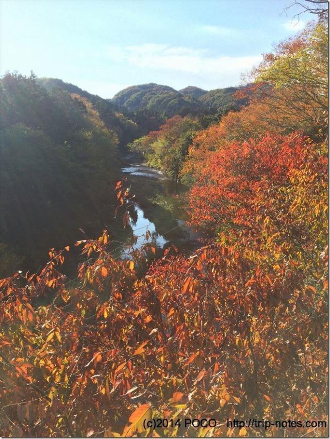 川沿いの紅葉