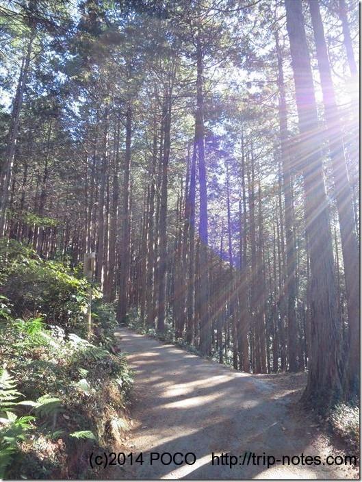 物見山への山道