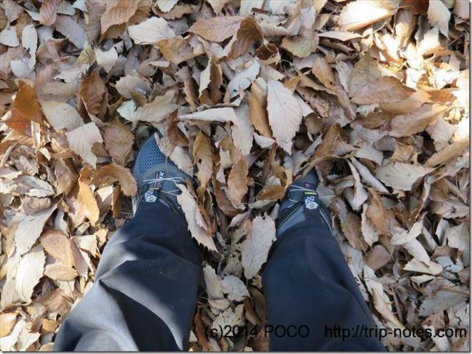 深い落ち葉