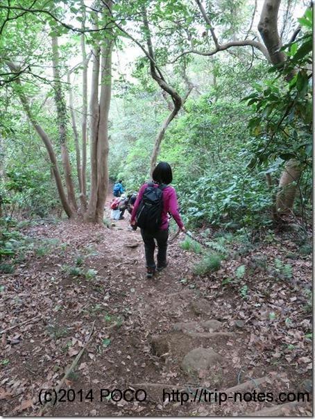徳倉山からの下り