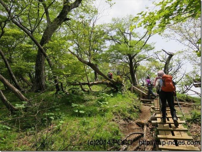 檜洞丸木道