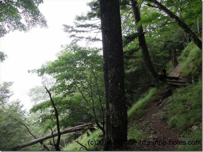 三峰雲取自然研究路