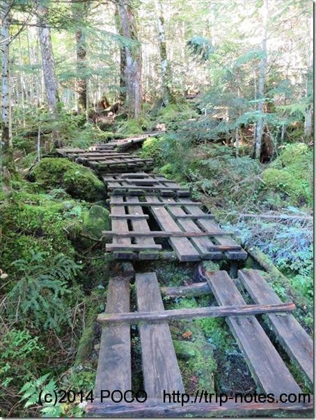 白駒荘から高見石小屋への山道