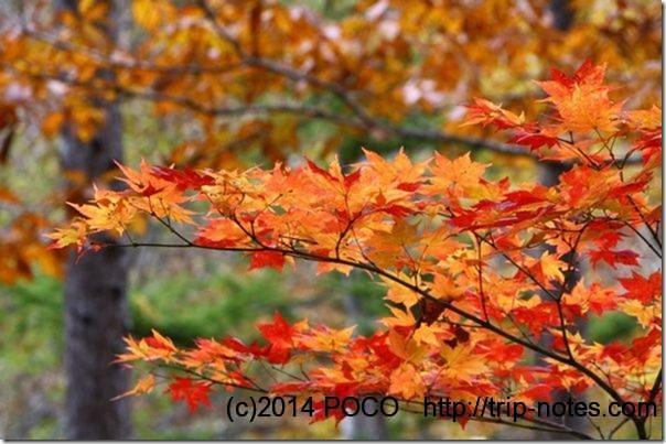 谷川岳_5215