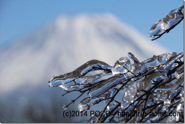 竜ヶ岳の雨氷