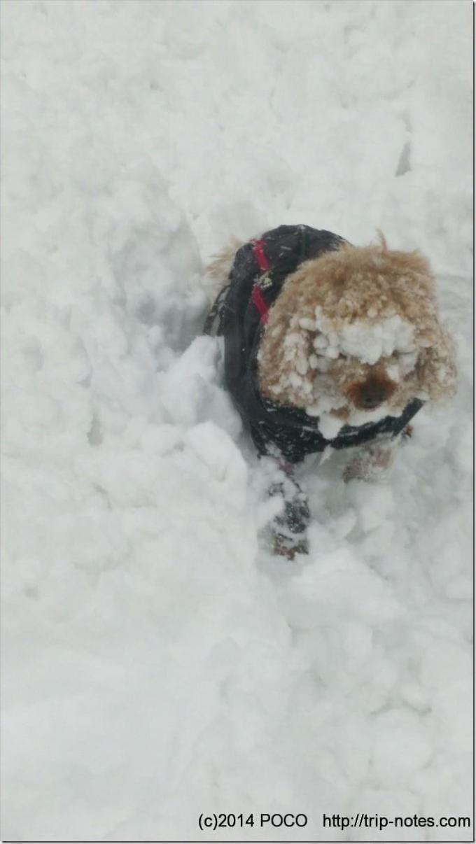 雪だらけのアニーちゃん