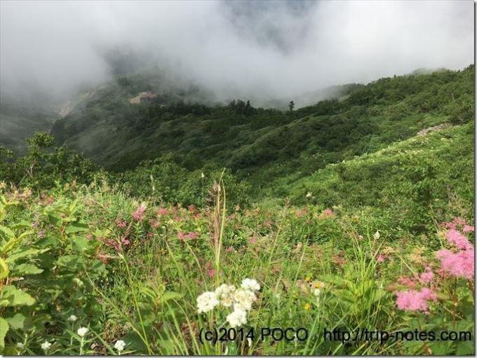 白山_お花畑