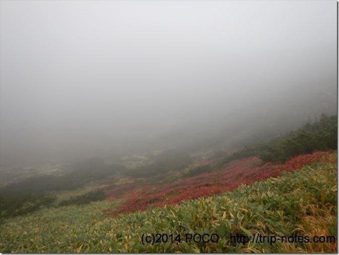 草津白根山紅葉