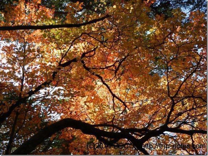 編笠山登山道の紅葉