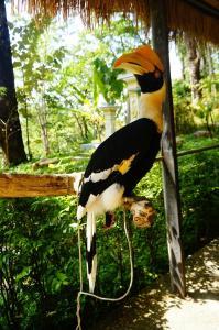 Парк птиц, Пхукет