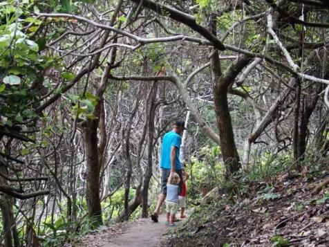 Tree sisters walk, Broken head
