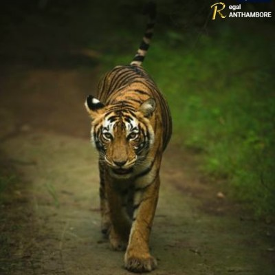 R is for Ranthambore