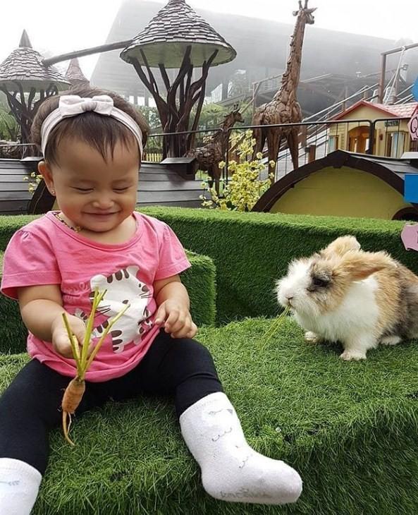 rabbit wonderland dusun bambu