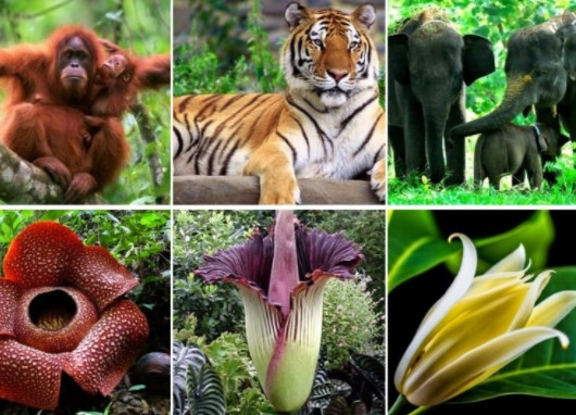 Apa sajakah yang mempengaruhi keragaman jenis flora dan fauna yang ada di dunia