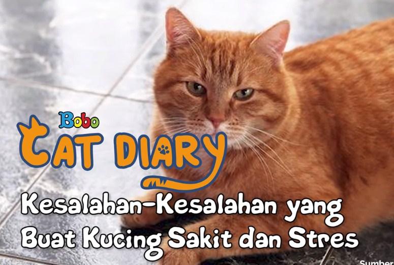 Apa saja kesalahan dalam memperlakukan kucing peliharaan di rumah?
