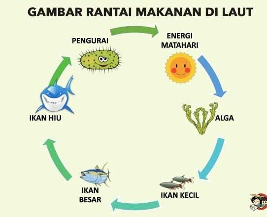 Gambar rantai makanan di laut