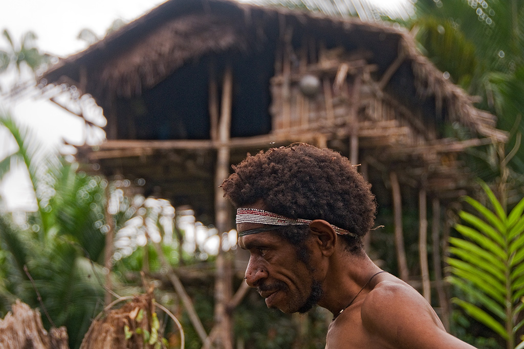 About Korowai Tribe Tree Houses In Papua New Guinea And Indonesia Traditions Map And Location Tripfreakz Com