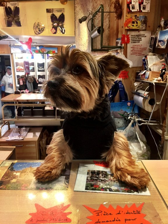 We met this dog behind a counter in a souvenir shop in Annecy