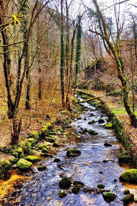Forest River near Duggingen