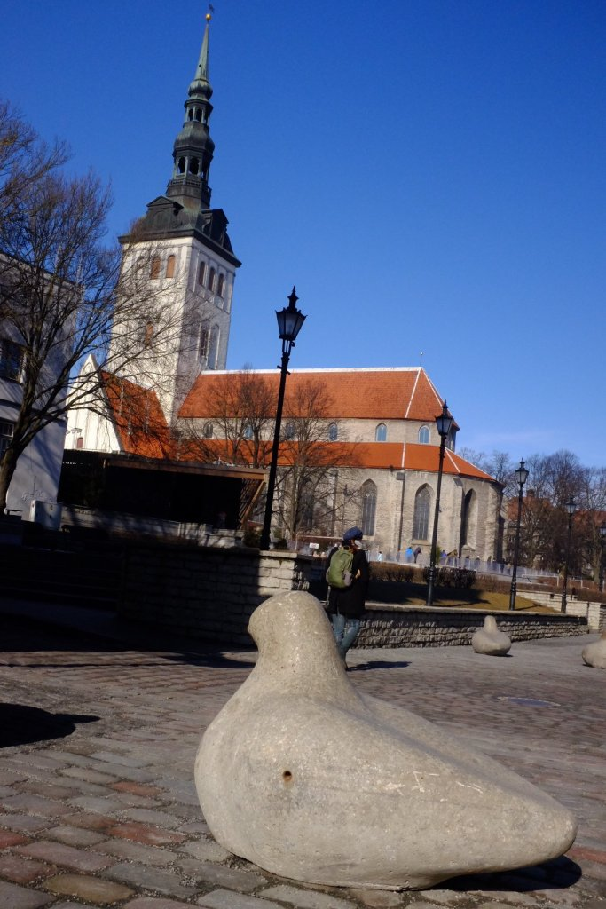 Pigeon in front of the St. Nicholas Church in Tallinn