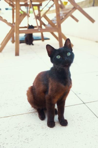 Three days in Porto . Terrace stray cat Portia