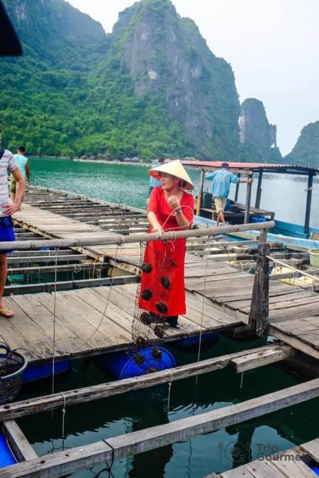 Halong bay cruise review guide oyster farm