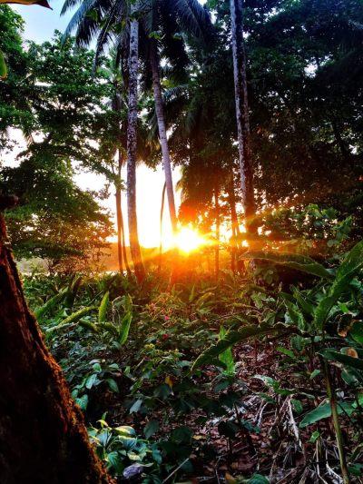 Sunset Jungle Tortuguero