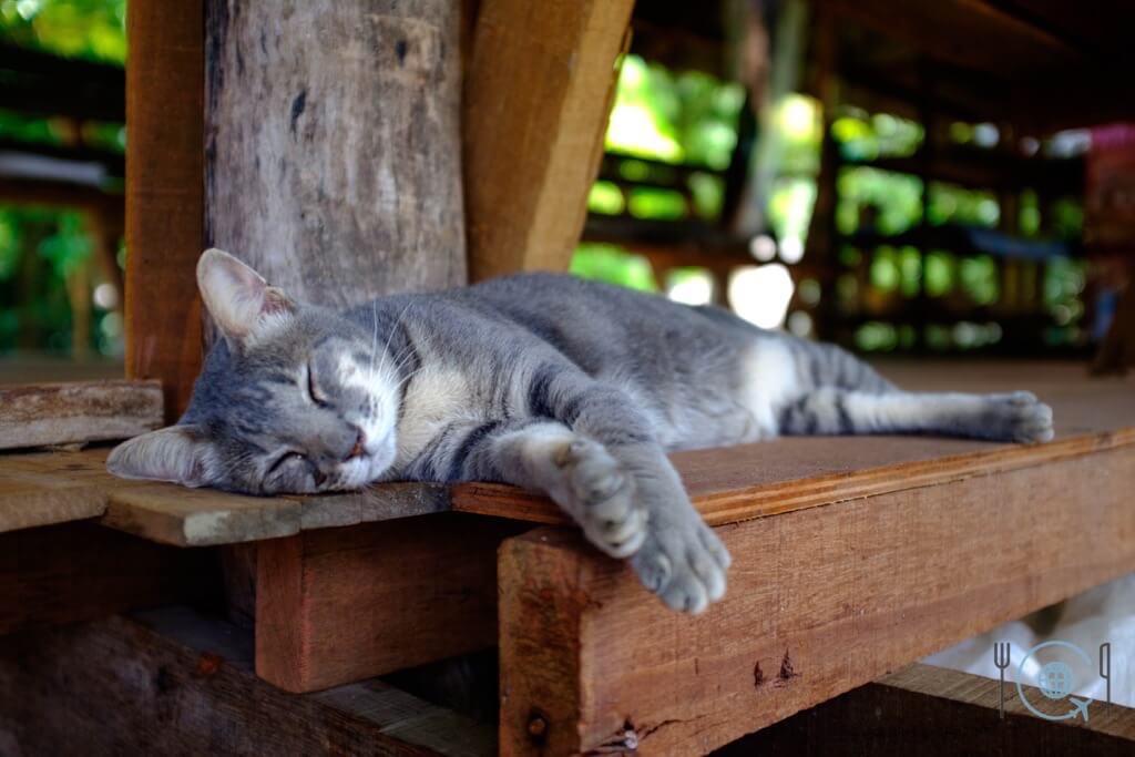 Chiang Mai Itinerary elephant nature park cat kingdom