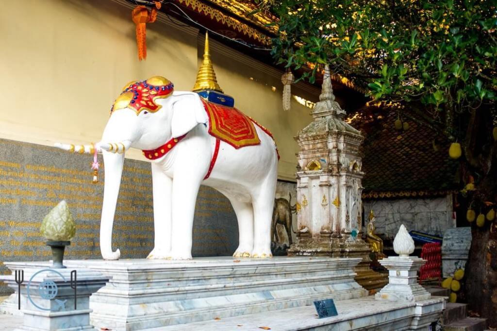 Chiang Mai Itinerary Doi Suthep white elephant