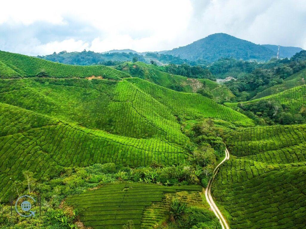 Kuala Lumpur Itinerary Cameron Highlands