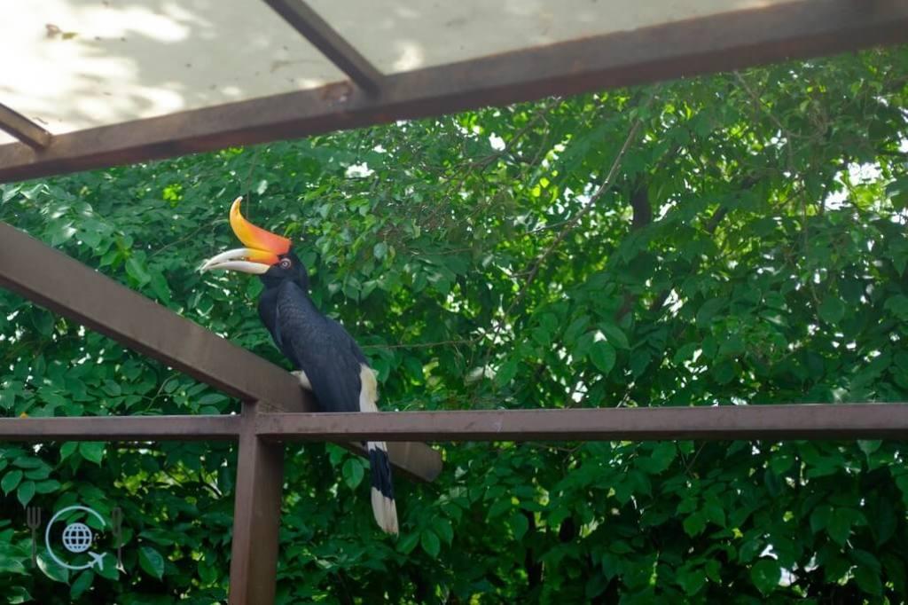 Kuala Lumpur Itinerary Hornbill