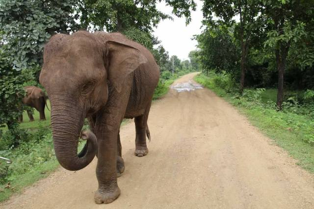 An Elephant spotted in Dalma Wildlife Sanctuary