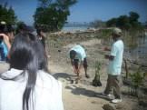 mangrove time04