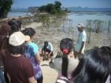 mangrove time05