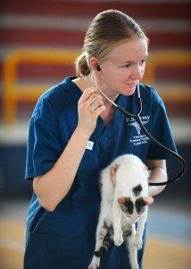 veterinarian carrying a pet