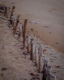 Beach wood, Koh Phayam, Thailand